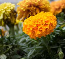 Orange Flame by JenFruzz