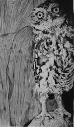 Little Owl by InjectVibrancy