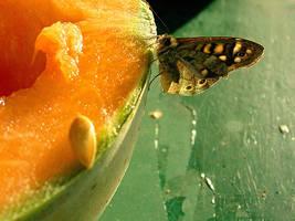 melon by matthieumarangoni