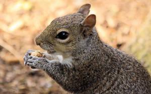 Squirrel Portrait ( new edit ) by UdoChristmann