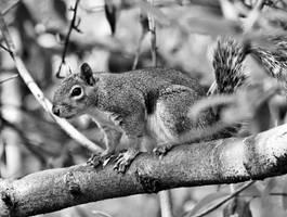 Squirrel by UdoChristmann