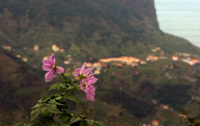 Flower on the edge by UdoChristmann