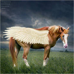 HEE Horse Avatar - Fire Wing by Vellum-Graphics