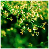Summer Love Green. by Cute-Sleepwalker
