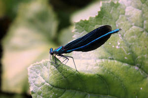 damselfly by rok993