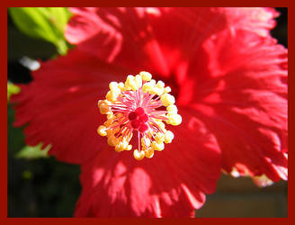 Red Flower by b0o-b0o