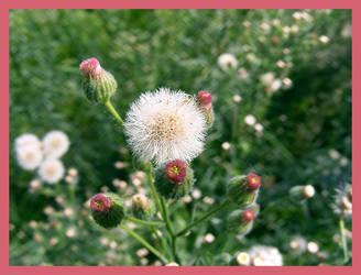 Sweet Flower by b0o-b0o