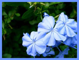Intense Blue by b0o-b0o