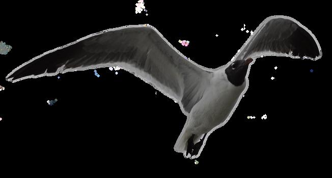 Climbing Gull by TThealer56