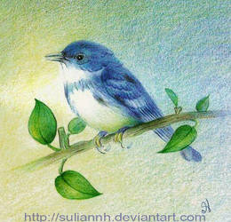 Mountain Blue Bird by SuliannH