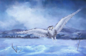 Northen Snowy Owl by SuliannH