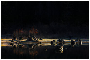 Square Root of Tree - by Derek Swiderski by kilgore-trout