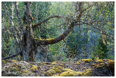 Enchanted by kilgore-trout