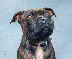Pet Portrait - Staffy by balloonfactory