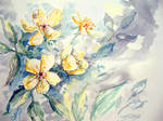 Roses 2 by maroe