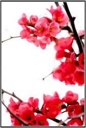 Japan Flower by joganelken