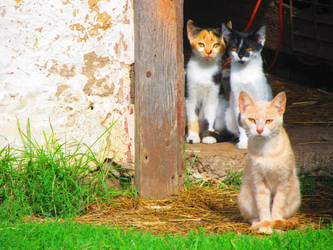 Looking cats by lallirrr-photography