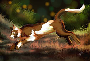 Warriors: Harespring by Marshcold