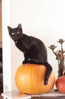 Halloween 1 by MoraNox-Stock