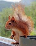 Miss Squirrel by Little-Dreamer