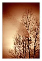 Flying Through Shadows by Triagon