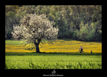 ...spring... by canismaioris