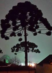 Winter Night by ZukoVyper