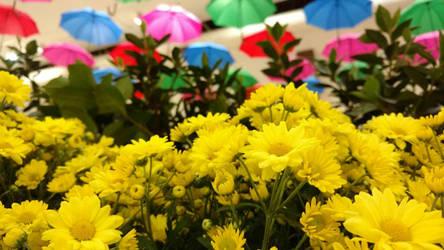 Spring Colours by ZukoVyper