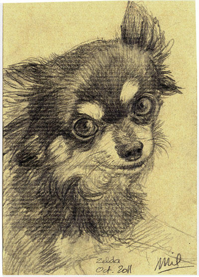 Chihuahua Portrait III by honeymil
