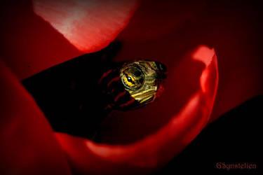 Inside a Tulip by UffdaGreg