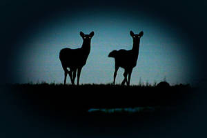 Deer Silhouettes by UffdaGreg