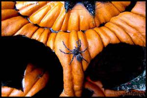 Jack-O-Spider by UffdaGreg