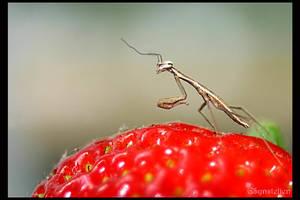 Strawberry Guard by UffdaGreg