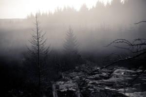 Deadwood by Carenza