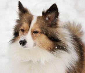 Snow Keezy by KiraRoux