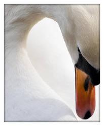 The Swan by Stilfoto
