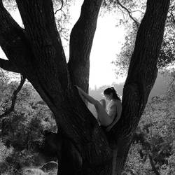 A Sacred Oak by melannc