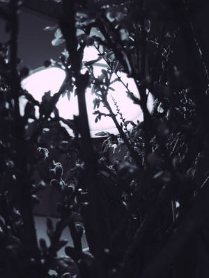 Into the Light by Kamishiro-Yuki