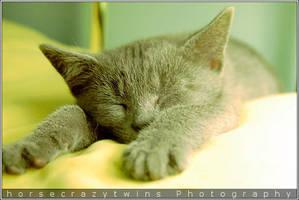 Sleeping cutey by aka-booboo