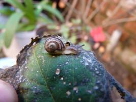 Little Snail by manuelvelizan