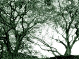 Sinapsis en el Parque by algomprado