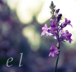 Purple Autumn. by BlackFrostRose
