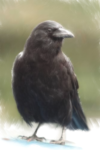 CorvusJette's Profile Picture
