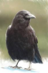 Corvus by CorvusJette