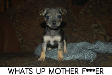 Whats up mother f***er by Darkressxx