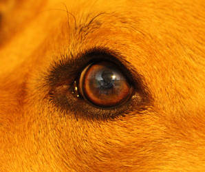 Rathel's Dog Eye by satsui