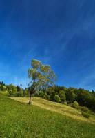 Blue Sky by Rapier1