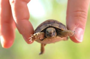 Me vs. Mr. Turtle by tatabatata