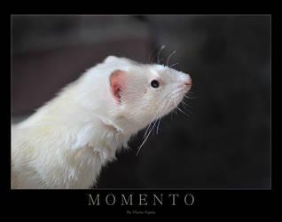 MOMENTO by Yukkabelle
