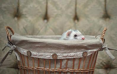 My Little Basket by Yukkabelle